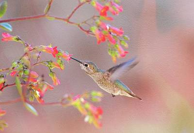 Photograph - Hummingbird Parfait 2 by Lynn Bauer