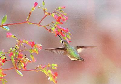 Photograph - Hummingbird Parfait by Lynn Bauer