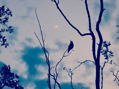 Photograph - Hummingbird Singing To The Moon by Judy Kennedy