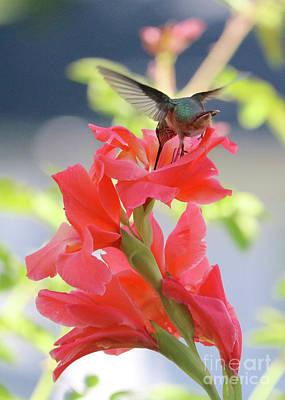 Photograph - Hummingbird Slide by Carol Groenen