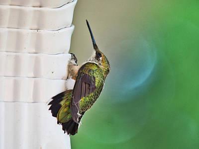Photograph - Hummingbird by Steven Ralser