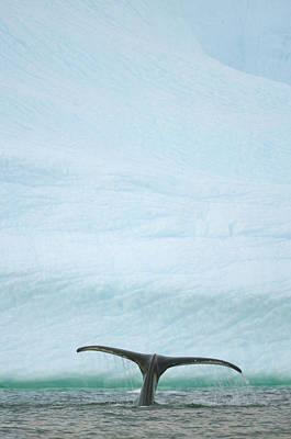 Photograph - Humpback Whale, Grandidier Passage by Eastcott Momatiuk