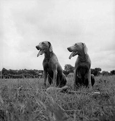 Photograph - Hunting Dogs by Carl Sutton