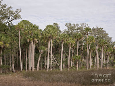 Photograph - Hunting Island Marsh 2 by Patrick M Lynch