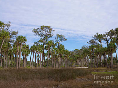 Photograph - Hunting Island Marsh by Patrick M Lynch