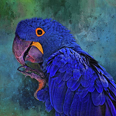 Photograph - Hyacinth Macaw by HH Photography of Florida