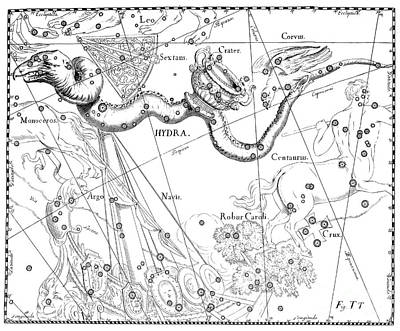 Drawing - Hydra Et Robur Carolinum, Austral Constellations Of Water Serpent And Charles Oak by Johann Hevelius