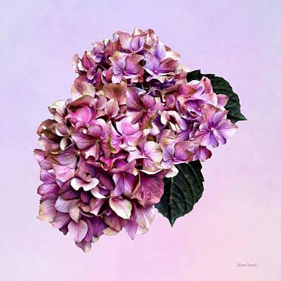 Photograph - Hydrangeas - Pink And Purple Hydrangea by Susan Savad