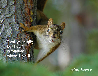 Photograph - I Got You A Gift by Joan Wallner
