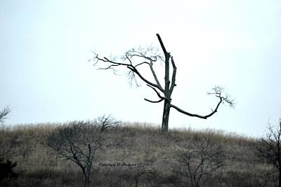 Wall Art - Photograph - Small Solitary Bare Tree Survived by Carolyn Hebert