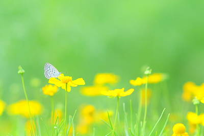 Insect Photograph - I Wanted To Talk To You In A Dream by Sonic