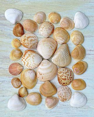 Photograph - I Wish To See Seashells II by Kathi Mirto