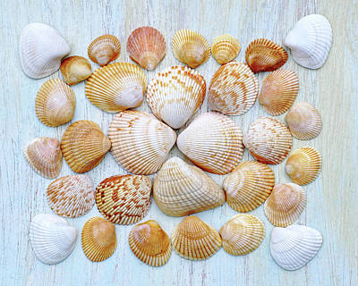 Photograph - I Wish To See Seashells by Kathi Mirto