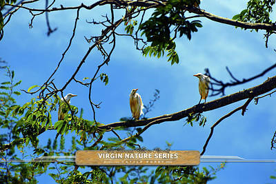 Photograph - Ibis Perch - Virgin Nature Series by Climate Change VI - Sales