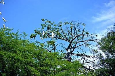 Photograph - Ibis Risen by Climate Change VI - Sales