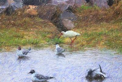 Animal Watercolors Juan Bosco - Ibis Walking And Seagulls Swimming by Cathy Lindsey