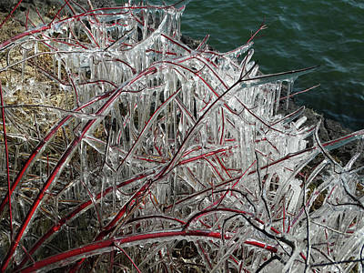 Photograph - Ice-coated Red Branches by David T Wilkinson