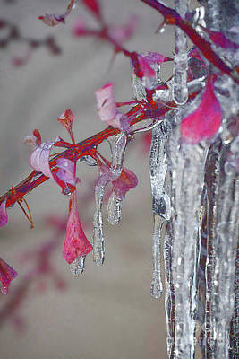 Photograph - Ice Cold by Susan Warren