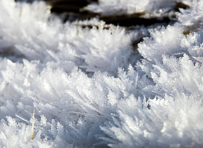Photograph - Ice Crystals by Michael Chatt