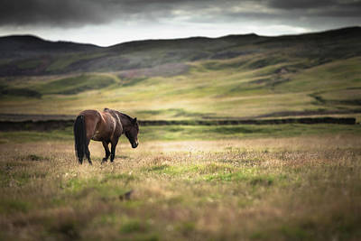 Photograph - Icelandic Horse In Field by Ed Norton