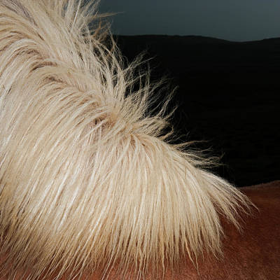 Close Up Photograph - Icelandic Horse by Roine Magnusson