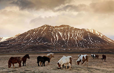 Photograph - Icelandic Horses In Dramatic Landscape by Daniel Bosma