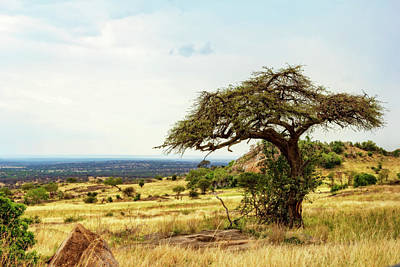 Photograph - Iconic African Landscape by Kay Brewer