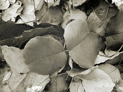 Photograph - Icy Leaves by Andee Design