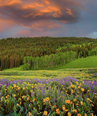 Photograph - Idaho Spring by Leland D Howard