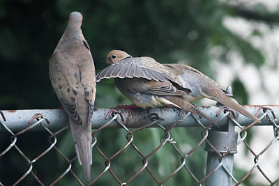 Featured Tapestry Designs - Ill Always Be There For You Mourning Doves by Terry DeLuco