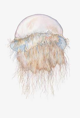 Illustration Of Nomuras Jellyfish Art Print by Dorling Kindersley
