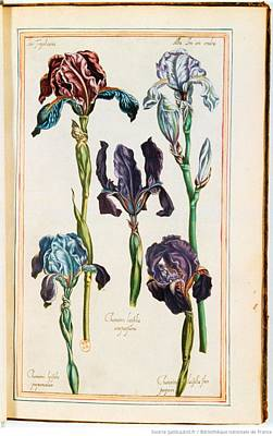 Kitchen Spices And Herbs - Illustrations of The Garden of the Very Christian Henry IV., Pierre Valet 26 by Celestial Images