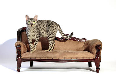 Photograph - Impatience On The Settee by Wes and Dotty Weber