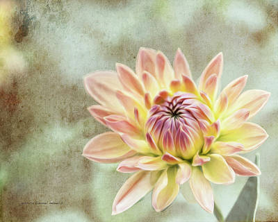 Wall Art - Photograph - Impression Flower by Jessica Manelis