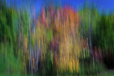 Moody Trees - Impression of Autumn 3 by Murray Pellowe