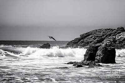 Photograph - In Flight At Point Dume Malibu by John Rizzuto