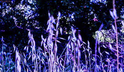 Photograph - In The City Lit By Fireflies by Denise Barnhart