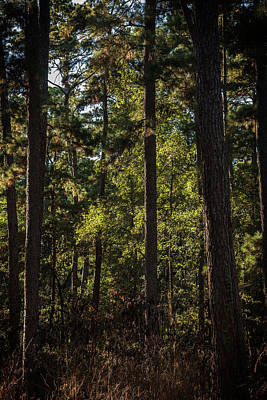 Photograph - In The Darkening Woods by Bud Simpson