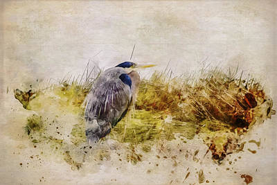 Digital Art - Heron In The Reeds by Marilyn Wilson