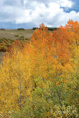 Photograph - Colorado's Hidden Gem by Susan Warren