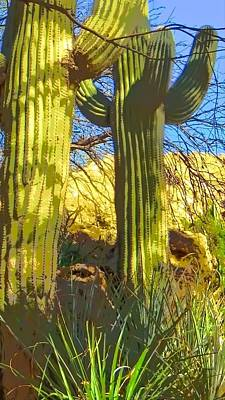 Photograph - In The Shadow Of Saguaros by Judy Kennedy