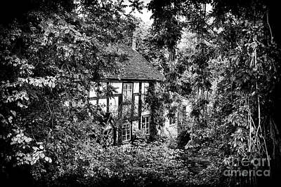 Photograph - In The Trees by Tim Gainey