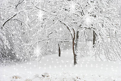Photograph - Incandescent And Florescent Winter by Cindy Boyd