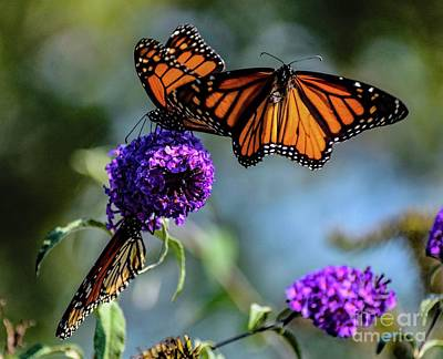Abstract Airplane Art - Incoming Monarch by Cindy Treger