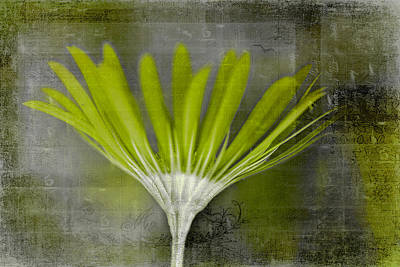 Photograph - Infused Green by Jacqui Boonstra