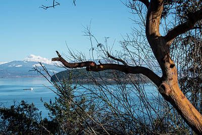 Photograph - Initials On A Madrona Tree by Tom Cochran