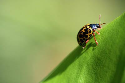 Insect Photograph - Insect by Adriana Casellato