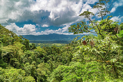 Arenal Photograph - Inspirational Forest by Betsy Knapp