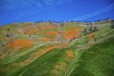 Photograph - Interstate 5 Poppies In The Grapevine by Lynn Bauer