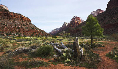 Photograph - Into The Canyon-zion National Park by TL Mair